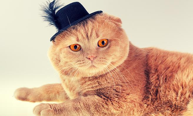 間違ったサイズの帽子をかぶっている