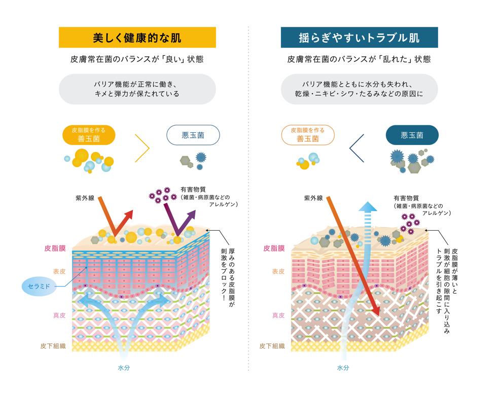 ヒト型セラミド 発酵液 SOPHISTANCE(ソフィスタンス)解説